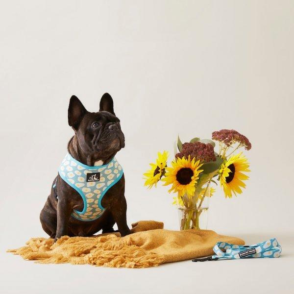 Dog Harness ~ Sunny Side Up 3
