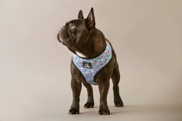 Sitting Pretty Harness 4