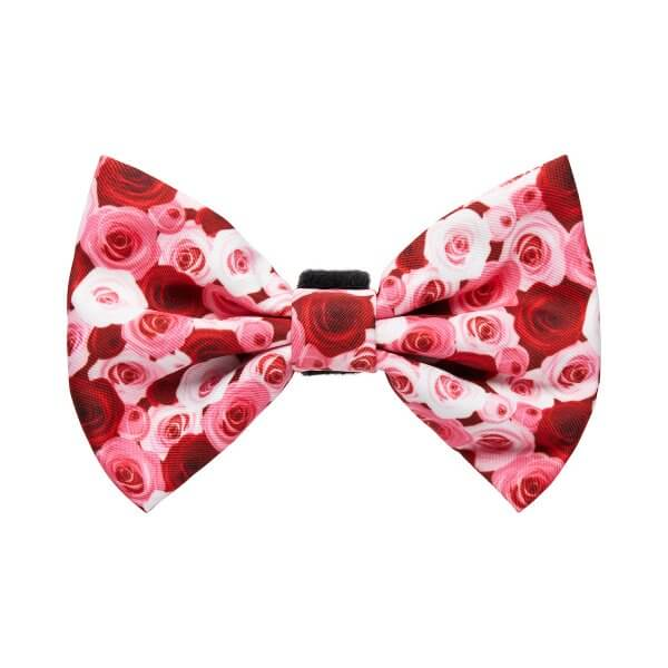 Feeling Rosé Bow-Tie 1