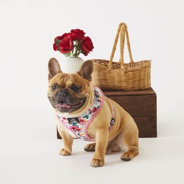 Adjustable Dog Harness ~ Sweet Blossom 5