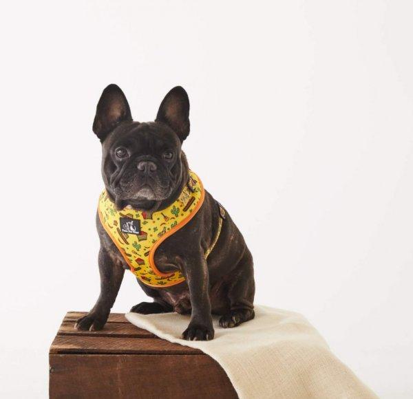 Adjustable Dog Harness ~ No Way Jose 5