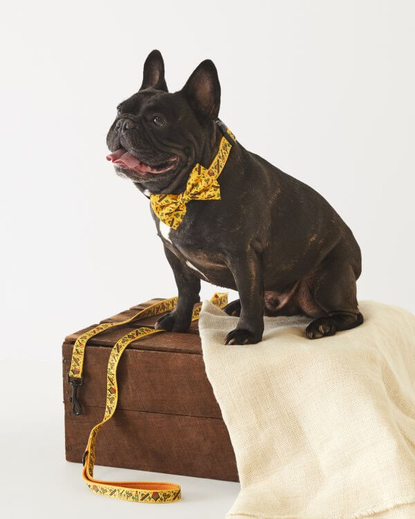Dog Collar ~ No Way Jose 2