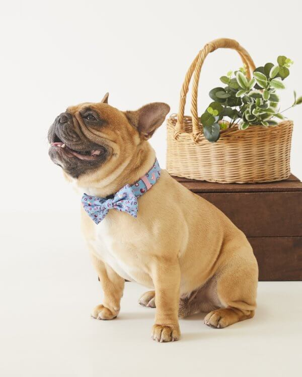 Dog Bowtie ~ Sitting Pretty 3
