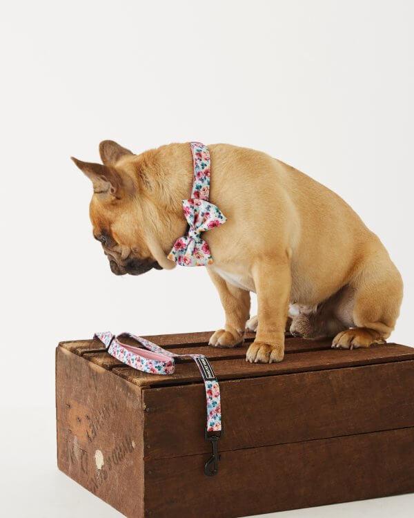 Dog Bowtie ~ Sweet Blossom 3